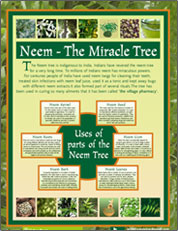 Neem The Miracle Tree